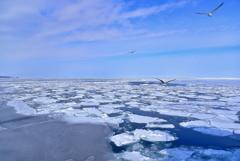 氷海の上で