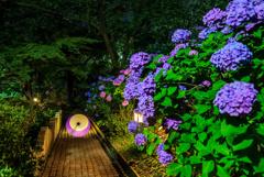 夜の多摩川台公園2