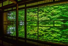 瑠璃光院の深緑リフレクション
