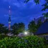 隅田公園の紫陽花2