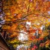 しょうざん庭園の逆光紅葉