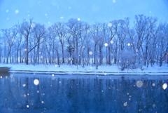 霧氷の林に雪が降る