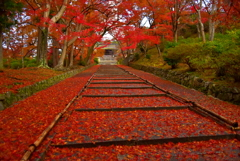 毘沙門堂の散紅葉