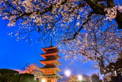 夜の池上本門寺