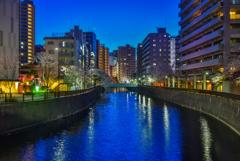 呑川の夜景