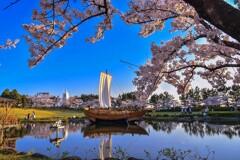 酒田 日和山公園の桜2