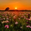 菖蒲園の夕日