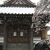 お堂の桜と雪