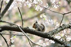 桜でひと休み