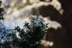 雪のイルミネーション