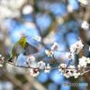 春の定番 Ⅱ