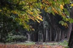 雨の公園と紅葉