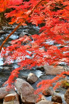 秋彩渓流 3