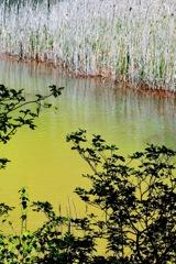 神秘の沼 1