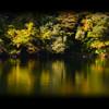初秋 五色沼の情景 一 ~ 斜陽に輝く ~