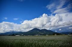 実りの秋へ  ~ 磐梯山と蕎麦畑 ~ 1