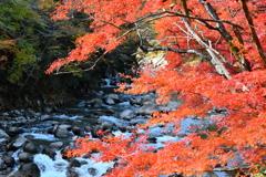 秋彩渓流 2