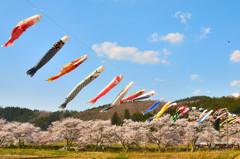 夏井の春 1