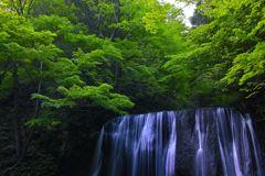 緑彩不動滝