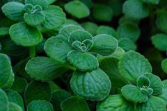 Cute leaf