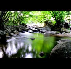 山鶏渓谷 ~初夏の色彩 七 ~