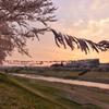 釈迦堂川の春 4