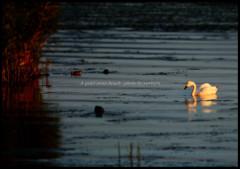 Evening glow of Inawashiro 4 ~白鳥浜の静かな夕暮れ