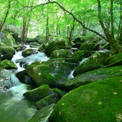 苔生す渓流