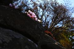 岩上の春あかり
