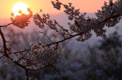 夕刻 ~ 桜包 ~