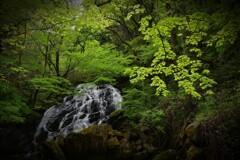 緑彩  ~癒しのそうめん~2