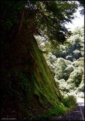 癒しの渓谷 六 ~ Few spaces of a mountain path