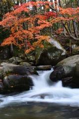 山鶏の渓流