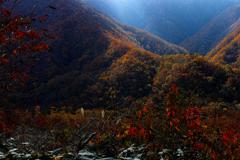 秋山を照らす