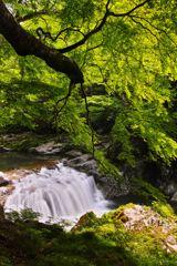 夏井川渓谷 ~ 新緑の大滝 ~