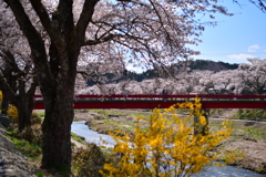 春彩夏井川 2