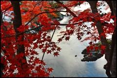 故郷渓谷廻り ~晩秋の彩~ 3