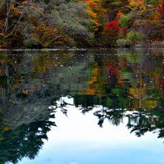 五色紅葉と空