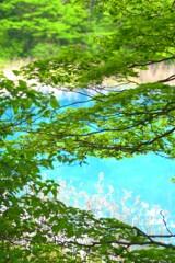 癒やしの緑彩沼