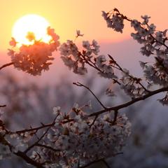 夕刻 ~ 桜包 ~ 2