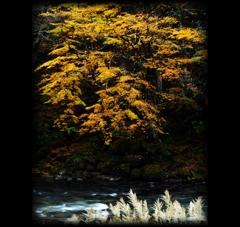 黄葉と晩秋のせせらぎ