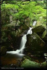 癒しの渓谷 十二 ~ Ooiwa Falls ~