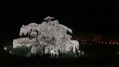偉大なる巨桜 3