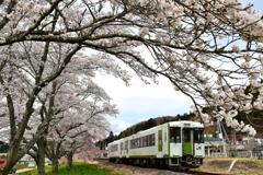 夏井の春 2