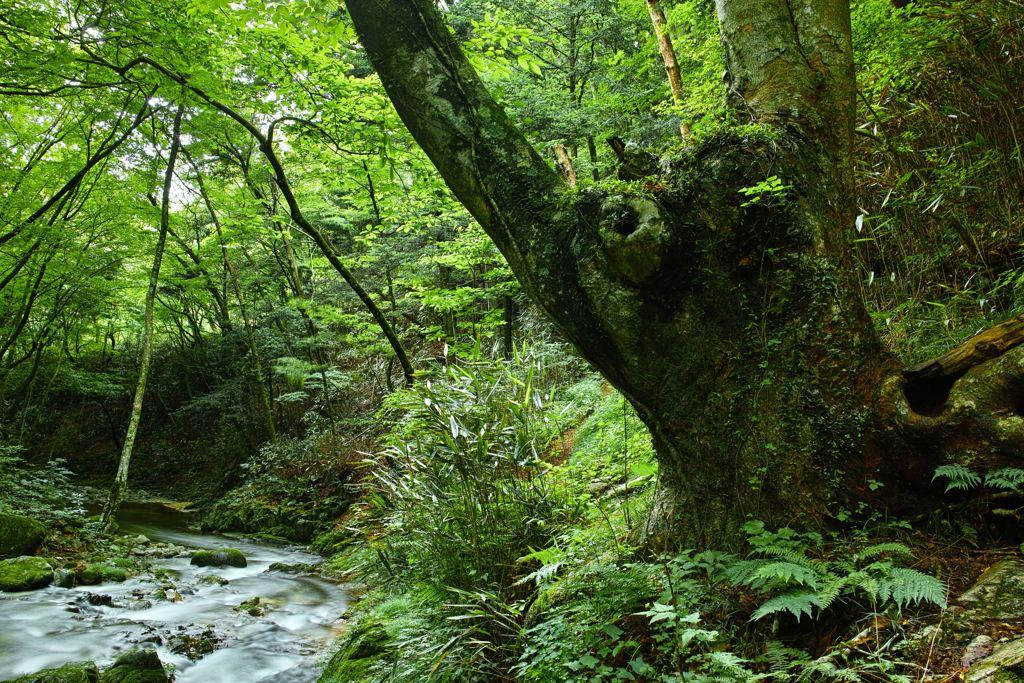 Haunted tree