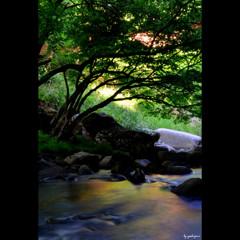 山鶏渓谷 ~初夏の色彩 一 ~