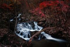 滝川の秋 6