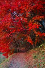 深秋の道 2