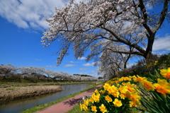 春彩夏井川 4