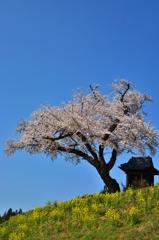 青空に映えて ~ 小沢の桜 ~ 1
